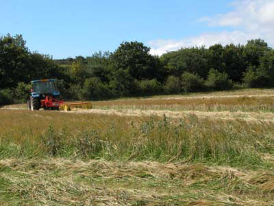 Cutting Barley Silage At Uphill Farm